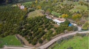 Landhaus von Obstbäumen umringt, 6500 m² Grundstück